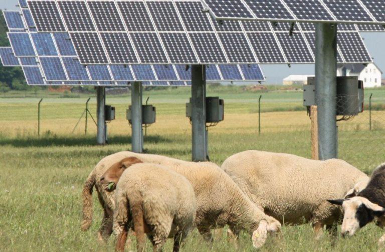 Gemeente Borsele blij met komst solarpark
